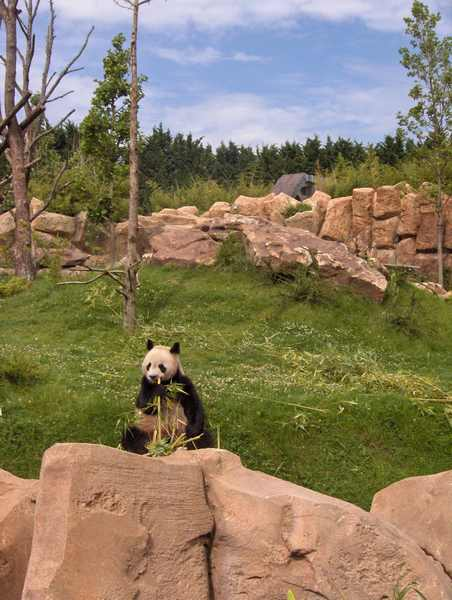 visite zoo beauval